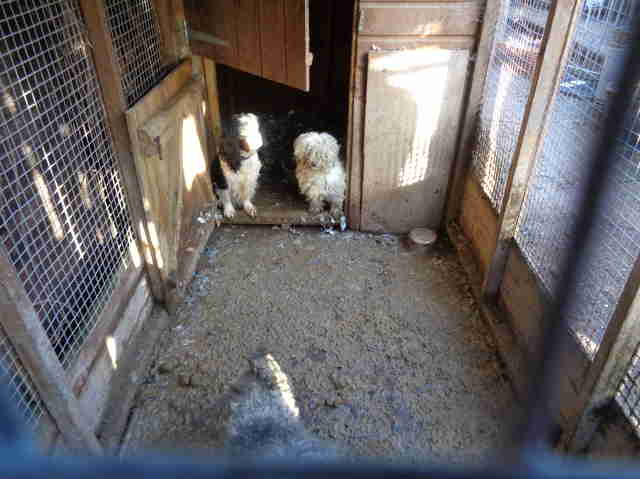 animals being kept in terrible conditions