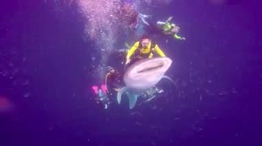 whale shark diver