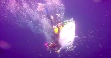 whale shark diver abuse