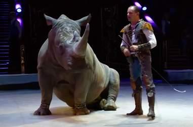 circus rhino cruelty