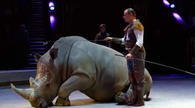 rhino circus cruelty