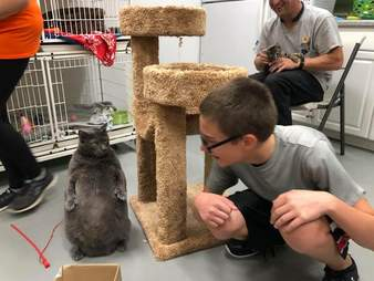 cat loves to stand on hind legs and pose