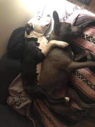 Dogs sleeping on couch together