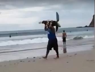 sea turtle steal nicaragua
