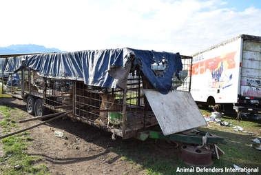 Circus lions kept in tiny cages