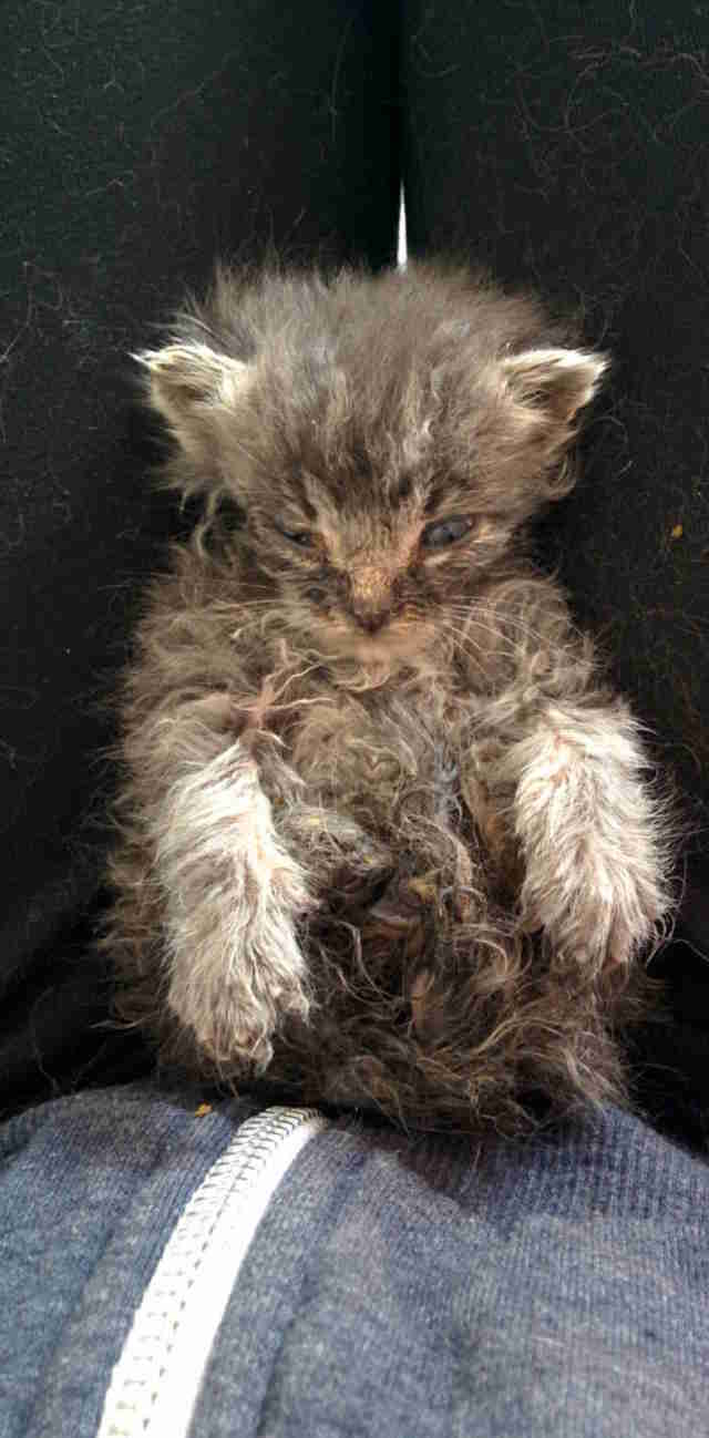 kitten rescued from hoarder