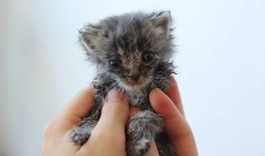 kitten rescued from a hoarder