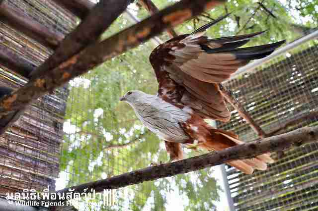 bird rescue thailand