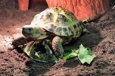 tortoise rescue england