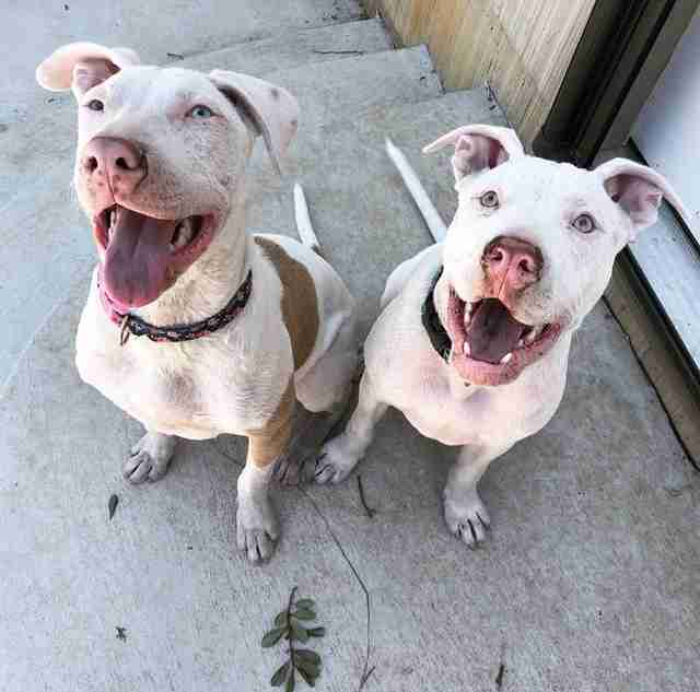 Two smiling puppies sitting on patio