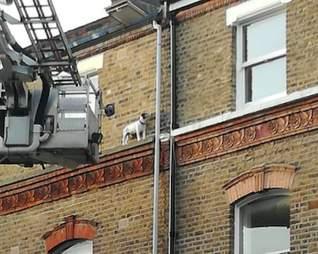 dog stranded window ledge london