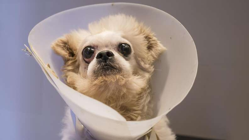 Dog with medical cone around his head