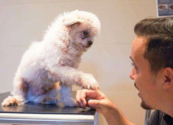 Dog touching paw of man