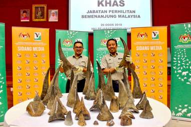 rhino horns malaysia
