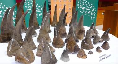 rhino horn malaysia smuggling