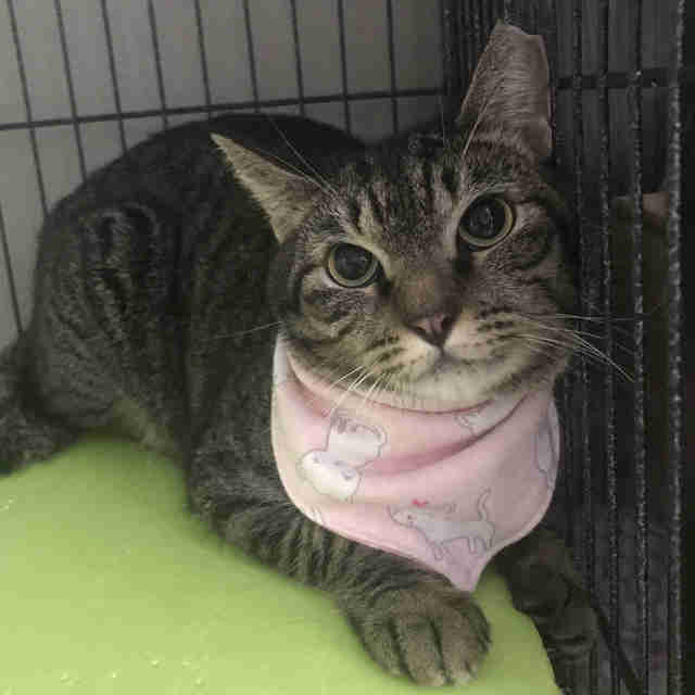 Cat with pink bandana around her neck