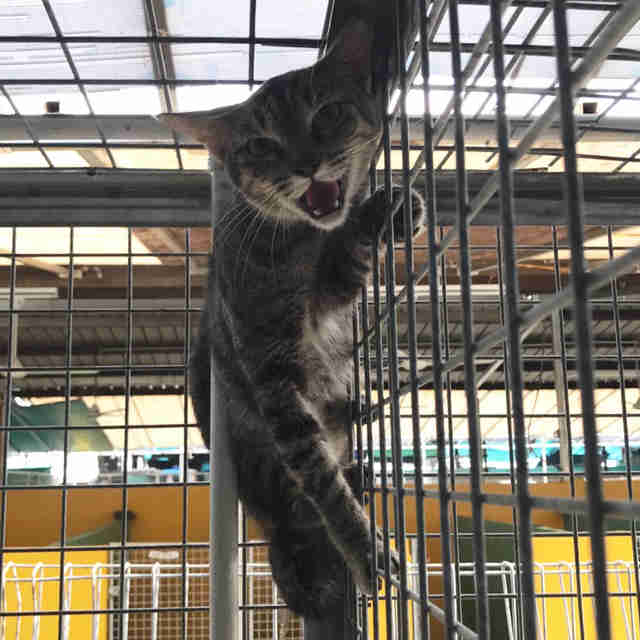 Scared cat climbing cage