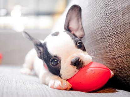 fur-ternity paid leave pet