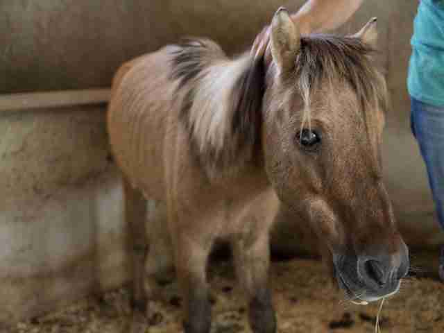 Abandoned pony saved by Easy Horse Care Rescue Center in Spain
