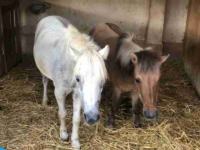 Rescued ponies who fell in love at sanctuary in Spain