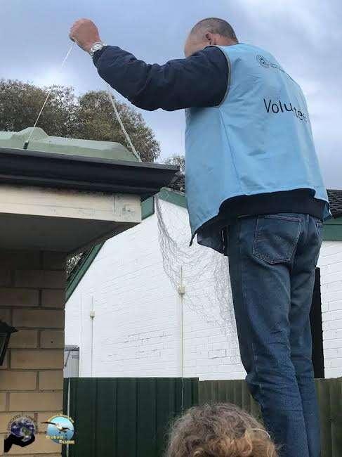 Man stepping on roof to retrieve injured bird