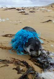 seal rescue australia