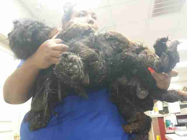 Vet tech holding matted dog in her arms