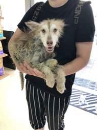 husky rescue china