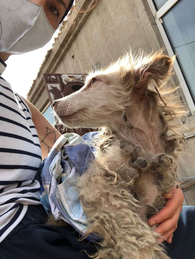 dog rescue husky matted china