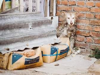 dog rescue china