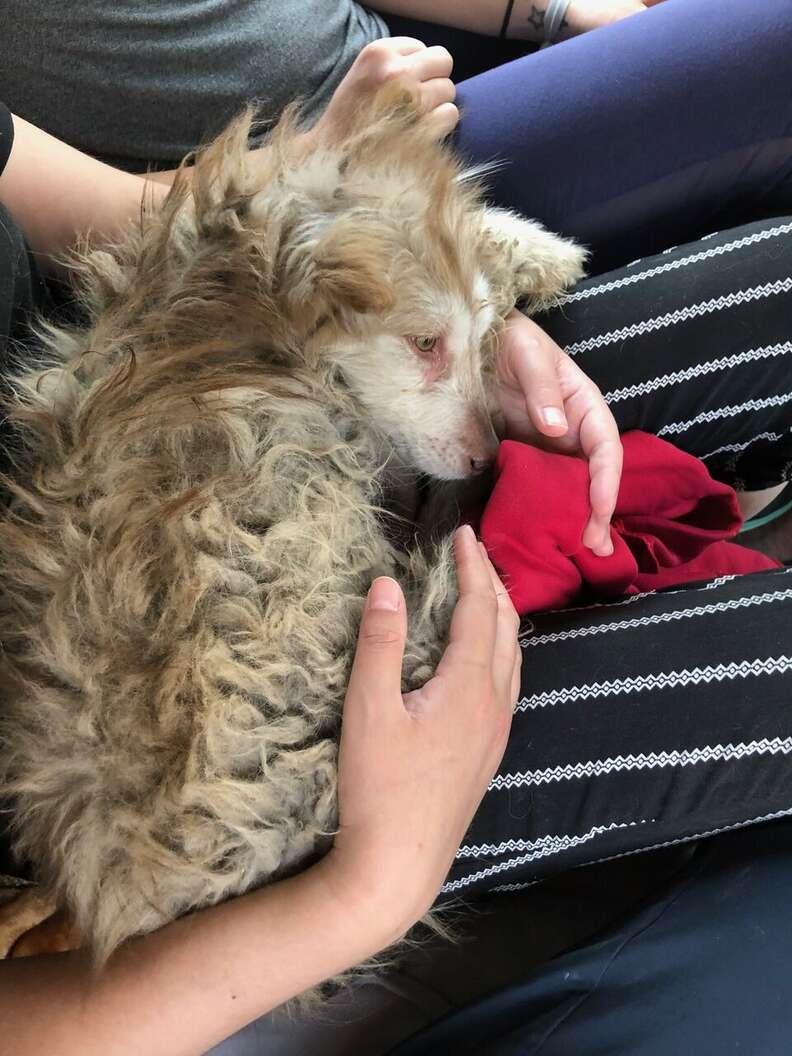 dog rescue husky china