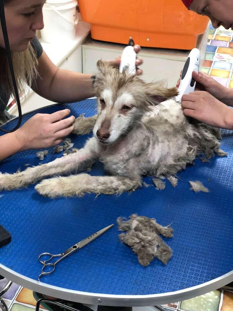 dog rescue china husky