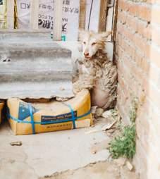 rescue dog husky china