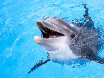 horny dolphin