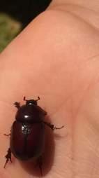 Beetle sitting on man's head