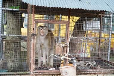 monkey rescue cage