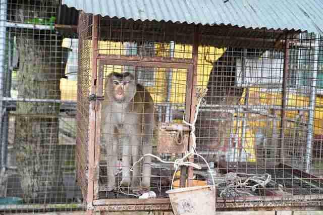 monkey rescue cage