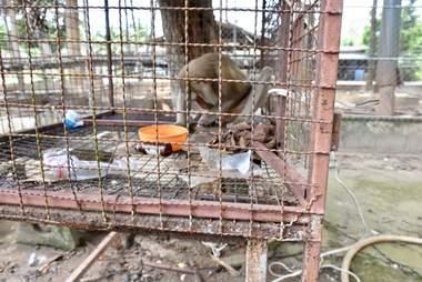monkey rescue thailand