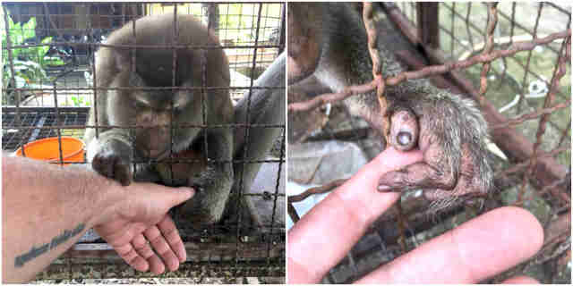 monkey rescue thailand