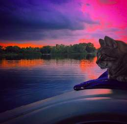kayak cat