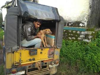 Scared dog in the back of a truck with rescuer