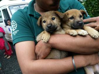 Man holding rescued puppies in his arms