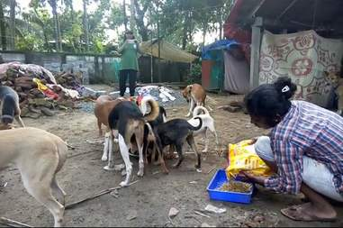 Woman feeding her dogs