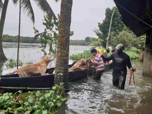 Dogs inside a boat during floods