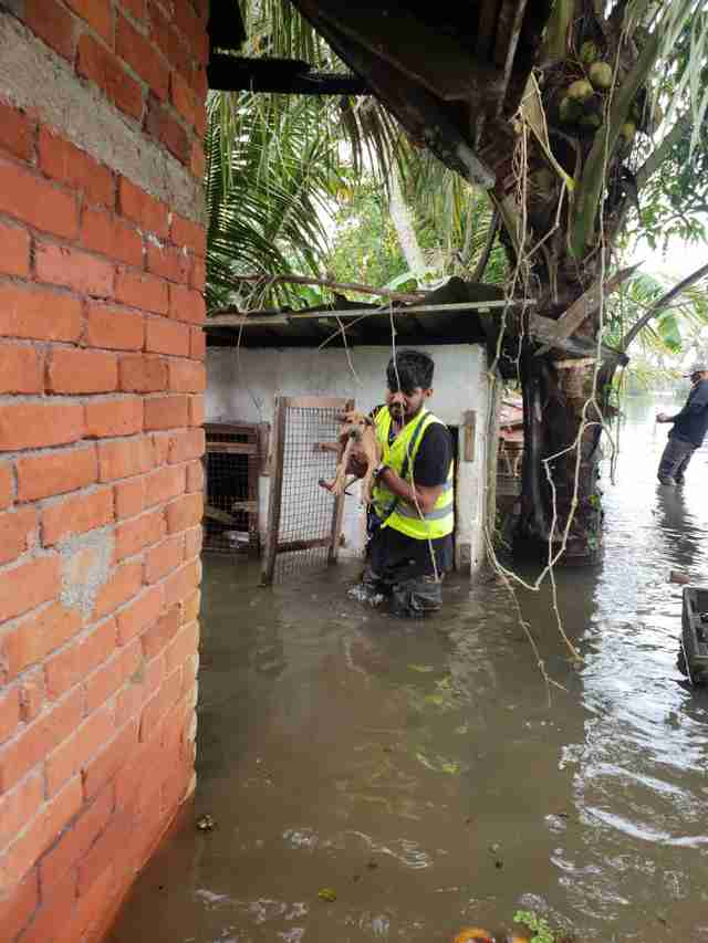 Man saving dog during flood