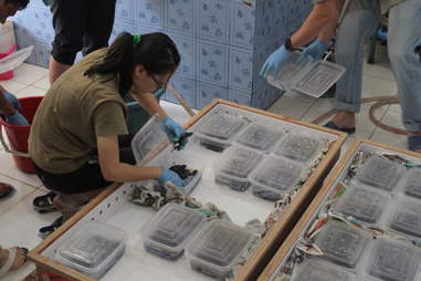 Pig-nosed turtles saved from smugglers in Hong Kong