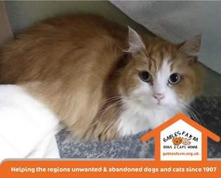 cat abandoned outside shelter