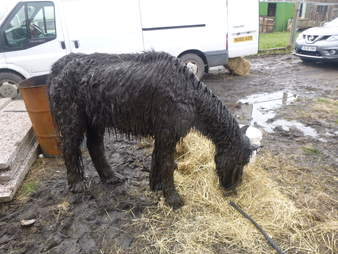neglected horses