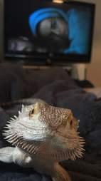 bearded dragon sleeping blanket