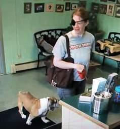 Woman leaves sick English Bulldog at groomers
